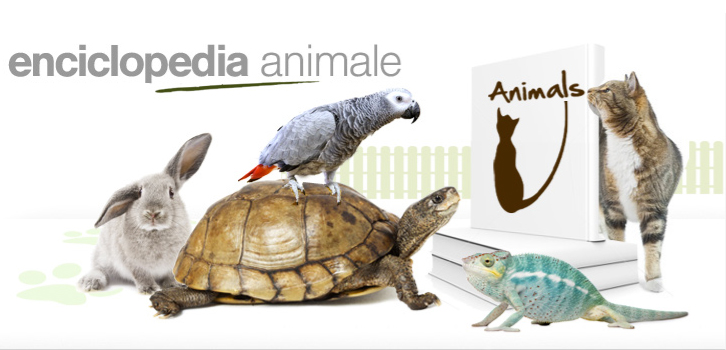enciclopedia animale